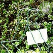 glasfiguur uwbuxus gans