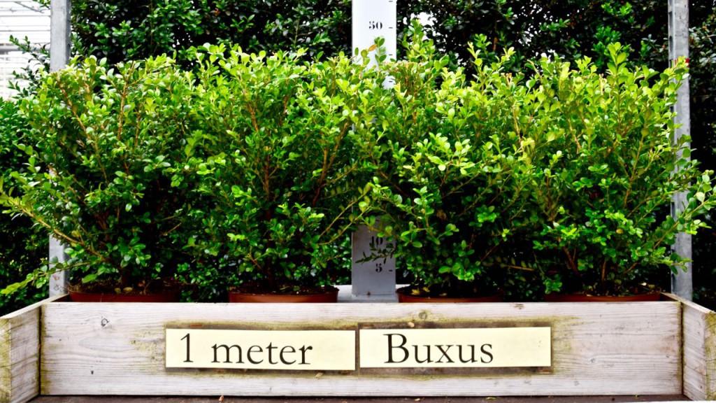 15 juli 2015 UW BUXUS - 12 van 72