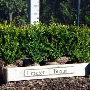 Buxus Microphylla Faulkner 45-50CM