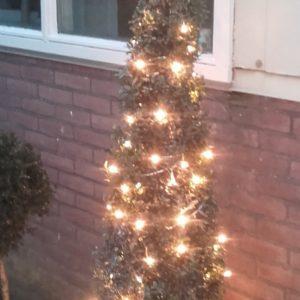 Buxus kegel als kerstboom